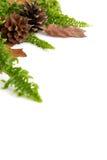 höstliga leaves för arragement royaltyfri foto