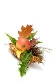 höstliga leaves för arragement royaltyfria bilder