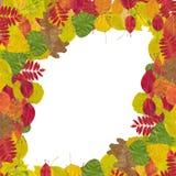 höstliga olika leaves Arkivfoto