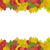 höstliga olika leaves Fotografering för Bildbyråer