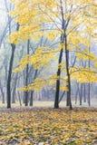 Höstliga träd parkerar in med stupat på den jordguld- lövverket du Arkivfoton
