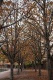 höstliga trees Royaltyfri Bild