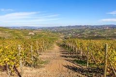Höstliga vingårdar av Piedmont, Italien, Arkivfoto