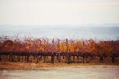 Höstliga vingårdar och dimmiga kullar på bakgrund royaltyfri fotografi
