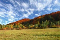 Höstliggande med trees och lawn i förgrunden Autuen royaltyfria bilder