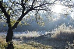 höstliggandemorgon ural russia Fotografering för Bildbyråer
