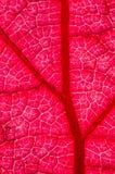 Höstligt blad i panelljus Arkivfoto
