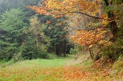 Höstligt färgrikt skoglandskap Arkivbild