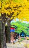 Höstligt ginkgoträd i härlig trädgård royaltyfri foto