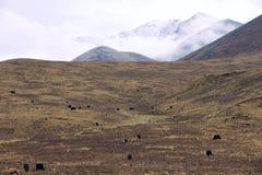 Höstligt höglands- landskap fotografering för bildbyråer