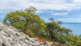 Höstligt landskap av den Black Sea kusten Arkivbilder
