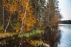 Höstligt landskap med gulingsidor på threes och fortfarande sjön Arkivbild