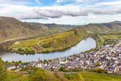 Höstligt Moselle landskap på den Bremm Calmont regionTyskland Royaltyfri Bild