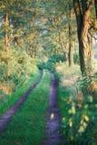 höstligt skogspår Royaltyfri Foto