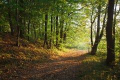 höstligt skogspår Fotografering för Bildbyråer