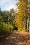 höstligt skogspår Royaltyfri Fotografi