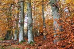Höstlynne djupt i skogen royaltyfria foton