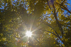 Höstlynne i oktober Fotografering för Bildbyråer