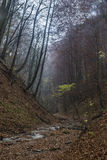 Höstlynne i skog Arkivbild