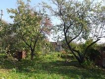 Höstmiddag i trädgården Fotografering för Bildbyråer