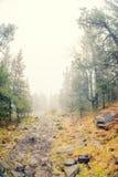 Höstmist över floden och skogen - härligt nedgånglandskap med en flod som går till och med stenar som omges av skogar i hösten Co Royaltyfria Foton