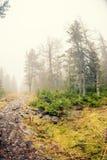 Höstmist över floden och skogen - härligt nedgånglandskap med en flod som går till och med stenar som omges av skogar i hösten Co Royaltyfri Bild