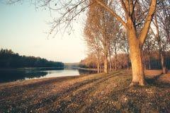 höstmorgon över floden Royaltyfri Bild