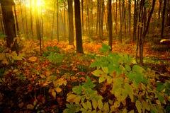 höstmorgon Arkivfoto