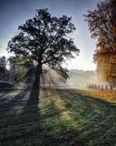 Höstmorgon nära den Vilnele floden royaltyfri foto