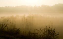 Höstmorgon - November Royaltyfri Fotografi
