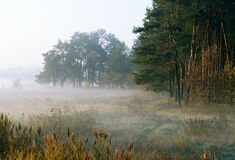 Höstmorgon vid en woodside Royaltyfri Bild