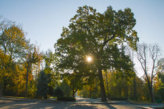 Höstmorgonen på parkerar Royaltyfria Foton