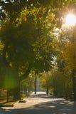 Höstmorgonen på parkerar Royaltyfri Foto