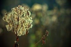 Höstnatur med blomningblomman royaltyfria bilder