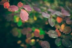 Höstnaturbakgrund med färgrika sidor på filial slapp fokus royaltyfria bilder