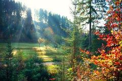 Höstnaturplats Dimmig gammal skog för härlig morgon arkivbilder