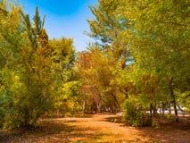 Höstnedgånglövverk parkerar landskap för träd för naturbakgrundsdetaljer Royaltyfri Foto