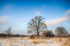 Höstnedgånglandskap: träd i snöig fält Royaltyfria Foton