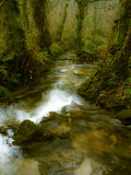 Höstnedgångplats med floden på skog Royaltyfria Bilder