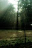 Höstnedgångplats med träd och sunbursts Royaltyfri Fotografi