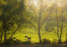 Höstnedgångplats på lantgård med hästar Arkivbilder
