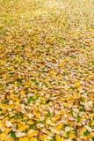 Höstnedgångsidor på gräs Royaltyfria Bilder