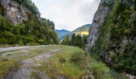 Höstpanorama i bergen av Abchazien Arkivbilder