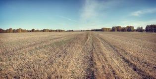 Höstpanorama i en solig dag med det mejade fältet Fotografering för Bildbyråer