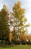 höstpark Royaltyfri Fotografi