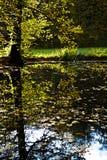 höstpark Royaltyfria Foton