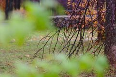 Höstpark efter regn Royaltyfri Bild
