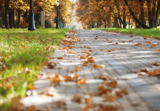 höstparkwalkway royaltyfria foton