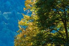 Höstplats i bergen av Abchazien Royaltyfri Bild