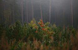 Höstplats med dimma och kulöra sidor arkivbilder